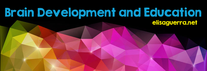 Brain development and education banner